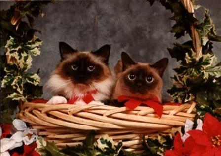 meowy_christmas.jpg
