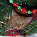 Meowy Christmas!!