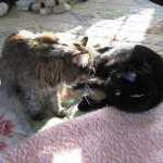 Formerly Feral - Sharing