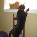 ManCats Window Sharing...Not!