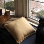 ManCats - More Cat TV