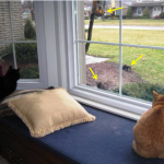 ManCats Watching Cat TV
