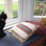 Mancats - Watch Cat