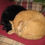 Mancats - Make Room for Wally