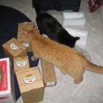 Mancats - Box Snoopervisors