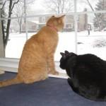 Mancats - Snow!!
