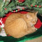 Three Under the Tree