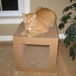 Mancats on Kittyblock!