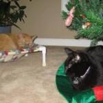 Winnie's Wish Ornaments