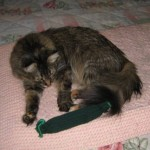 Formerly Feral - Tickle Pickle