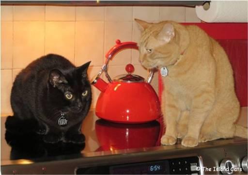 wally-ernie-stove