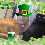 Mancats - Happy St. Patrick's Day!