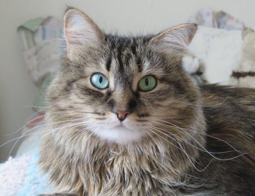 zoye-whiskers