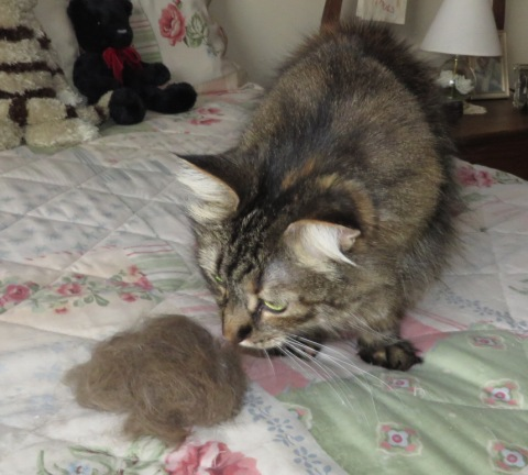 national hairball awareness day the island cats every