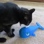 Mancats - Pacific Cat Toy Review