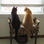 Mancats - I Can Too Share!