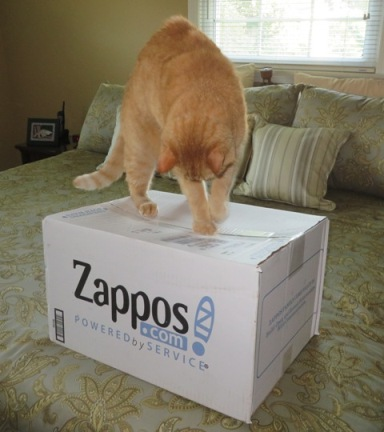 wally-zapposbox2