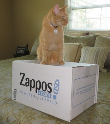 wally-zapposbox3