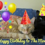 Mancats - Happy Birthday to the Mom
