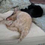 Mancats - No Bedmaking