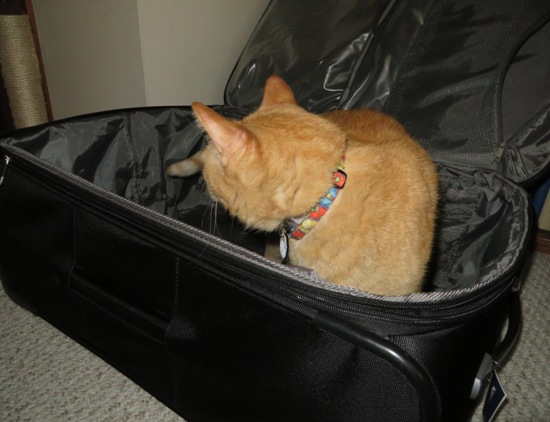 wally_suitcase