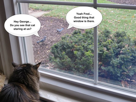 zoey-birdwatching2