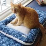 Mancats - What Will the Neighbors Think?