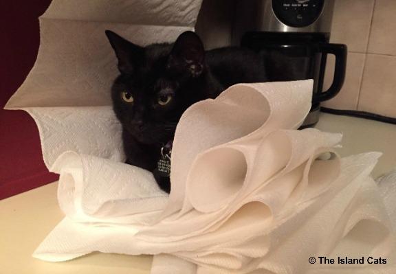 paper-towels-2