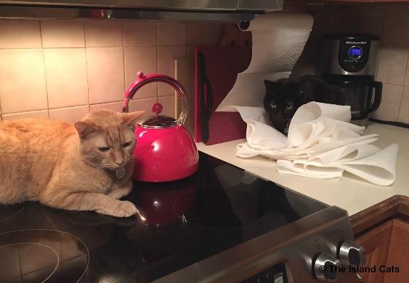 paper-towels-3