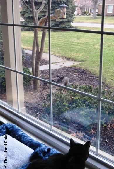 squirrel-acrobat-1