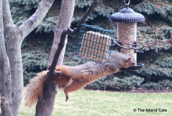 squirrel-acrobat-2