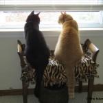 Mancats - Happy Memorial Day!