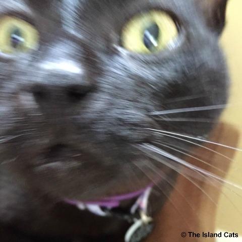 ernie-selfie-6.28.15