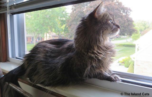 zoey-in-window