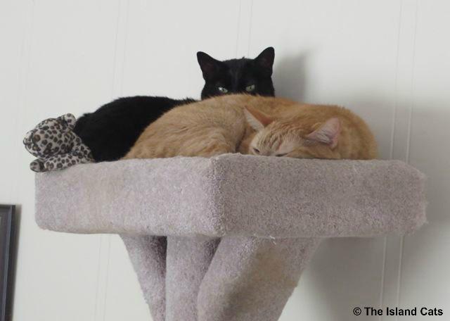wally-ernie-mr.leopard-cattree