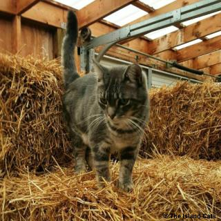 feralcatday2015-Slim playing in straw