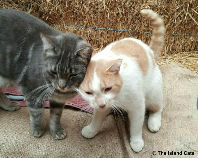 feralcatday2015-chip and slim headbutt