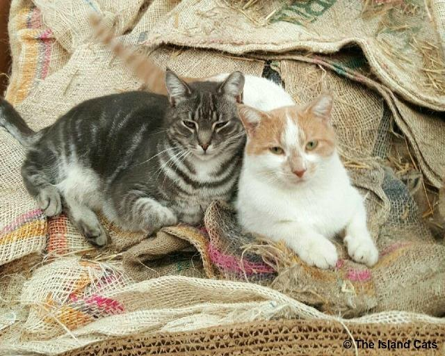 feralcatday2015-chip and slim