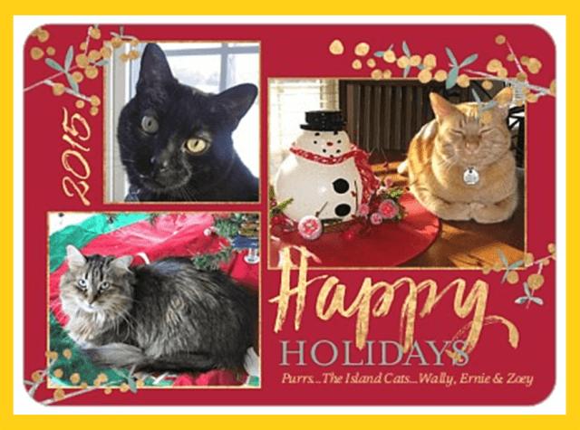 Island Cat Christmas Card 2015