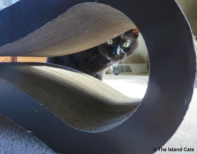ernie-peeking