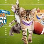 Easy E's Kitten and Super Bowl Sunday