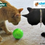 Play Away the Pounds with SlimCat™ - A Chewy #Sponsored Review