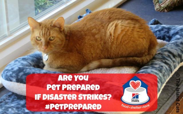 Pet Disaster Prepardness Day #PetPrepared