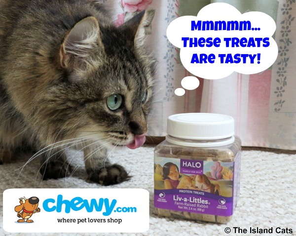 Zoey-chewytreatreview-4