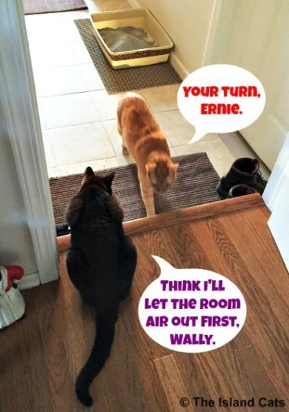 Where's the air freshner?