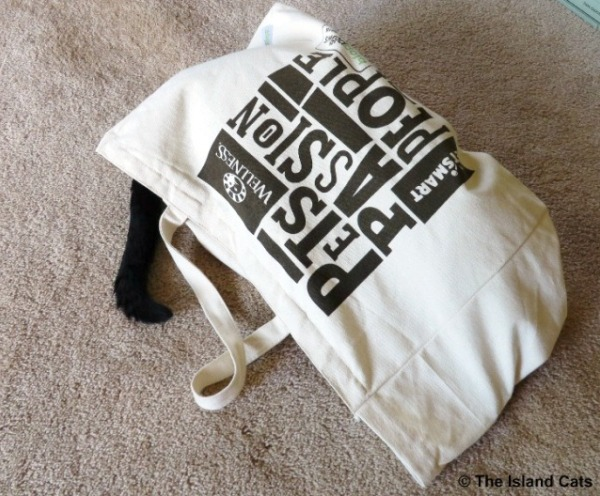 Ernie in BlogPaws swag bag