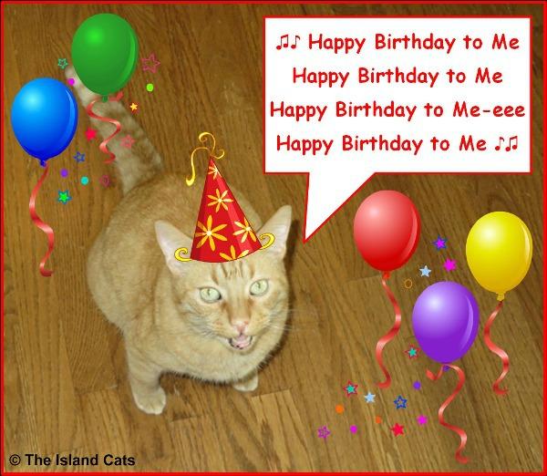 It's my 13th birthday!