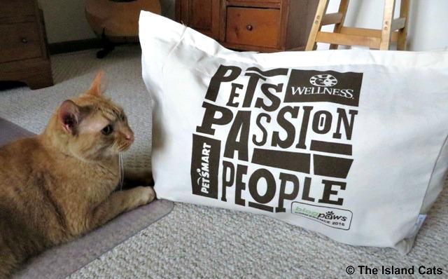Wally with BlogPaws swag bag