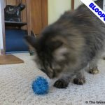 Get Me In Focus!  #PetBloggerBloopers