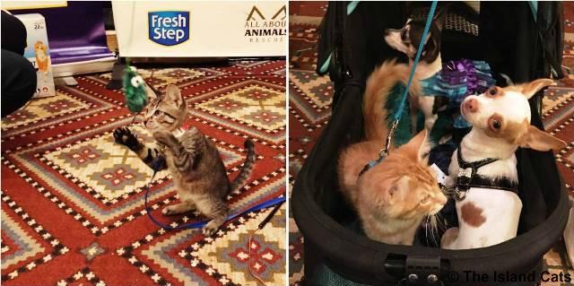 Kittens #BlogPaws